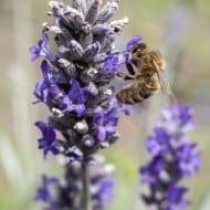 Welcoming Pollinators to Your Garden